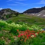 5-Mt-Timpanogos-Trail-Wild-Flowers