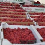 Canyons-Utah-Farmers-Market-Fresh-Raspberries